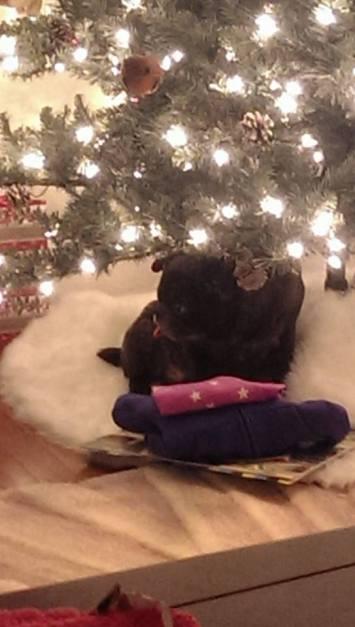 leo-under-christmas-tree
